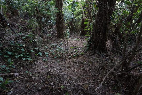 山中を強行突破。この写真はかなりひらけているところで撮ったが、実際はもっと密林。